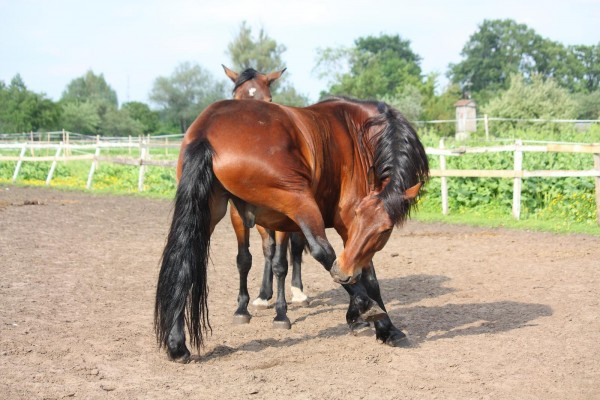 masterhorse-herbstgrasmilben-beim-pferd