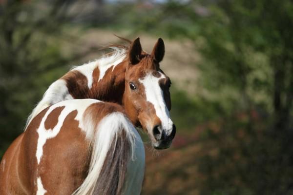 eiweissversorgung-beim-pferd_expertentipp