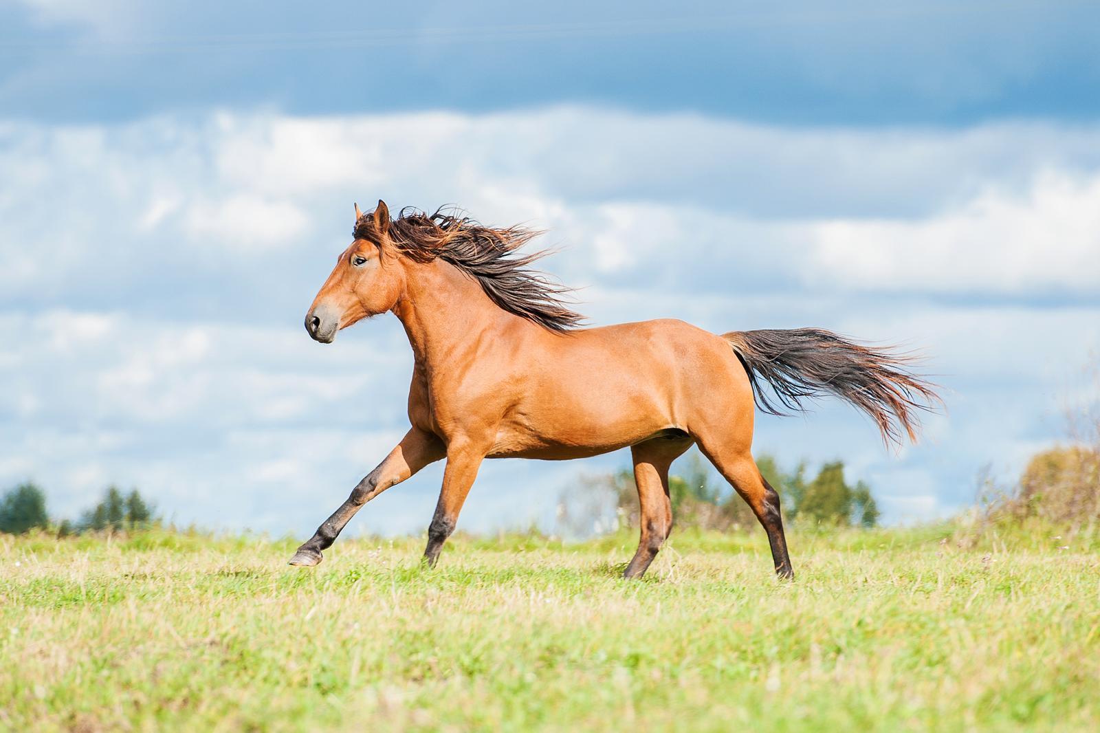 Eisenmangel beim Pferd - Behandlungen