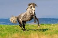 Magnesiummangel beim Pferd