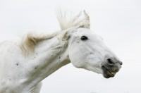 Headshaking Pferd - Heilungschancen und Behandlung