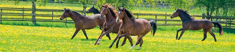 Vitamine, Zink, Selen und Mangan fürs Pferd. Kleine Mengen - große Wirkung!