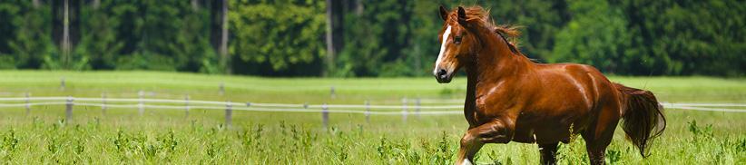 Muskelaufbau beim Pferd mit der Kraft der Natur