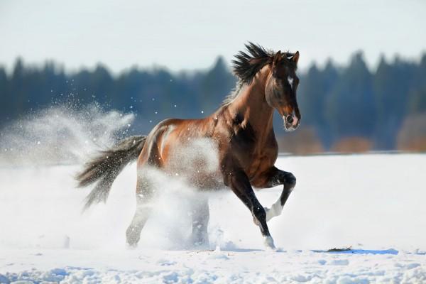 wnterfuetterung-pferd