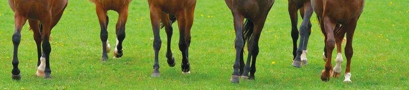 Kräuter für Pferde bei Arthrose oder Hufrollenentzündung