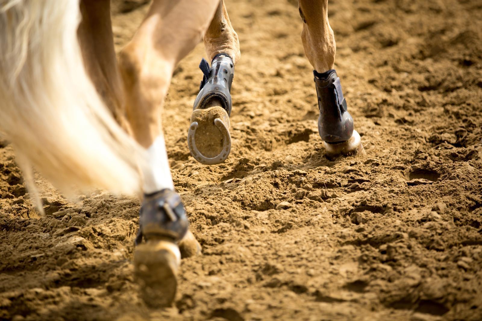 Spat beim Pferd