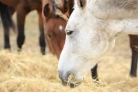 Darmsanierung beim Pferd