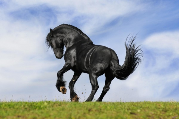 gallen-beim-pferd-masterhorse