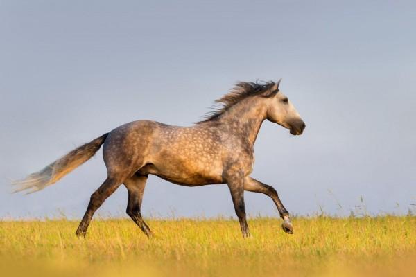 arthrose-beim-pferd-masterhorse-expertentipp