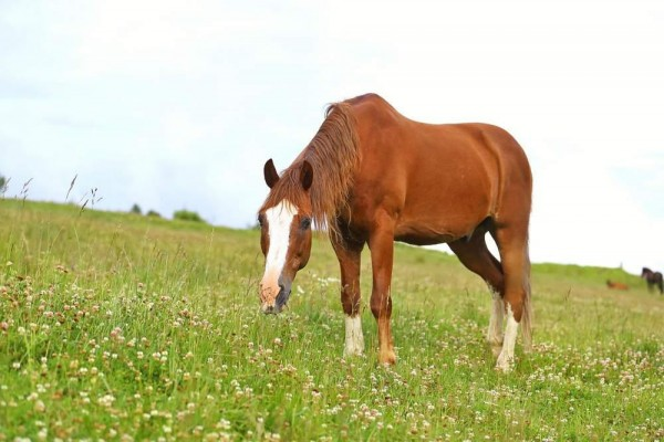 pferde-richtig-anweiden_web