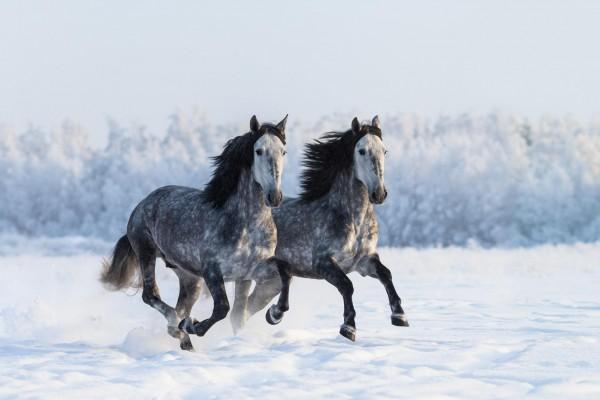 weben-beim-pferd