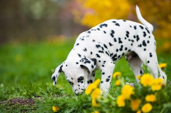 wuermer-beim-hund-masterdog-expertentipp
