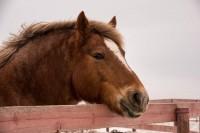 EMS beim Pferd