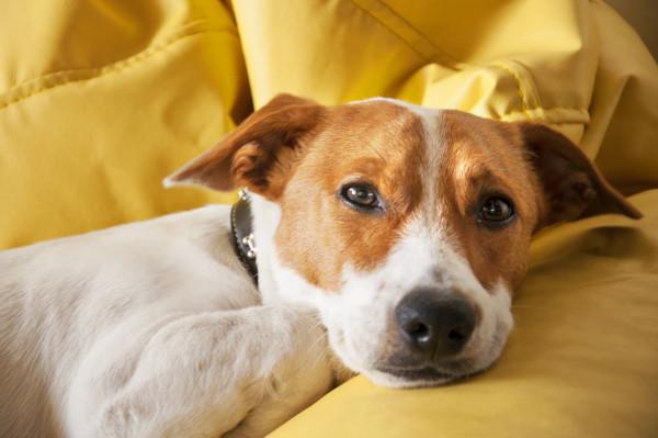masterdog_magenschleimhautentzuenung-hund