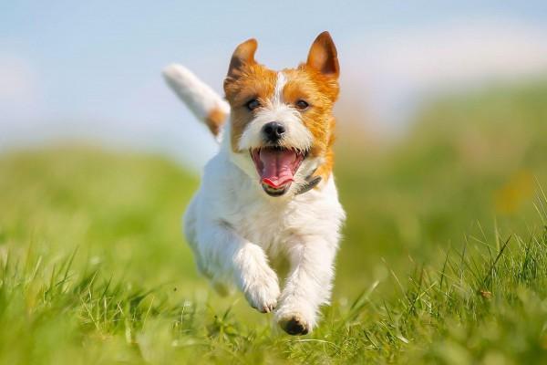 masterdog-leishmaniose