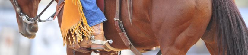 Muskulatur und Muskelaufbau beim Pferd