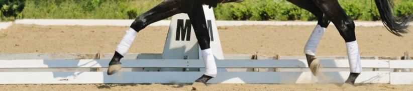 Gelenkprobleme beim Pferd
