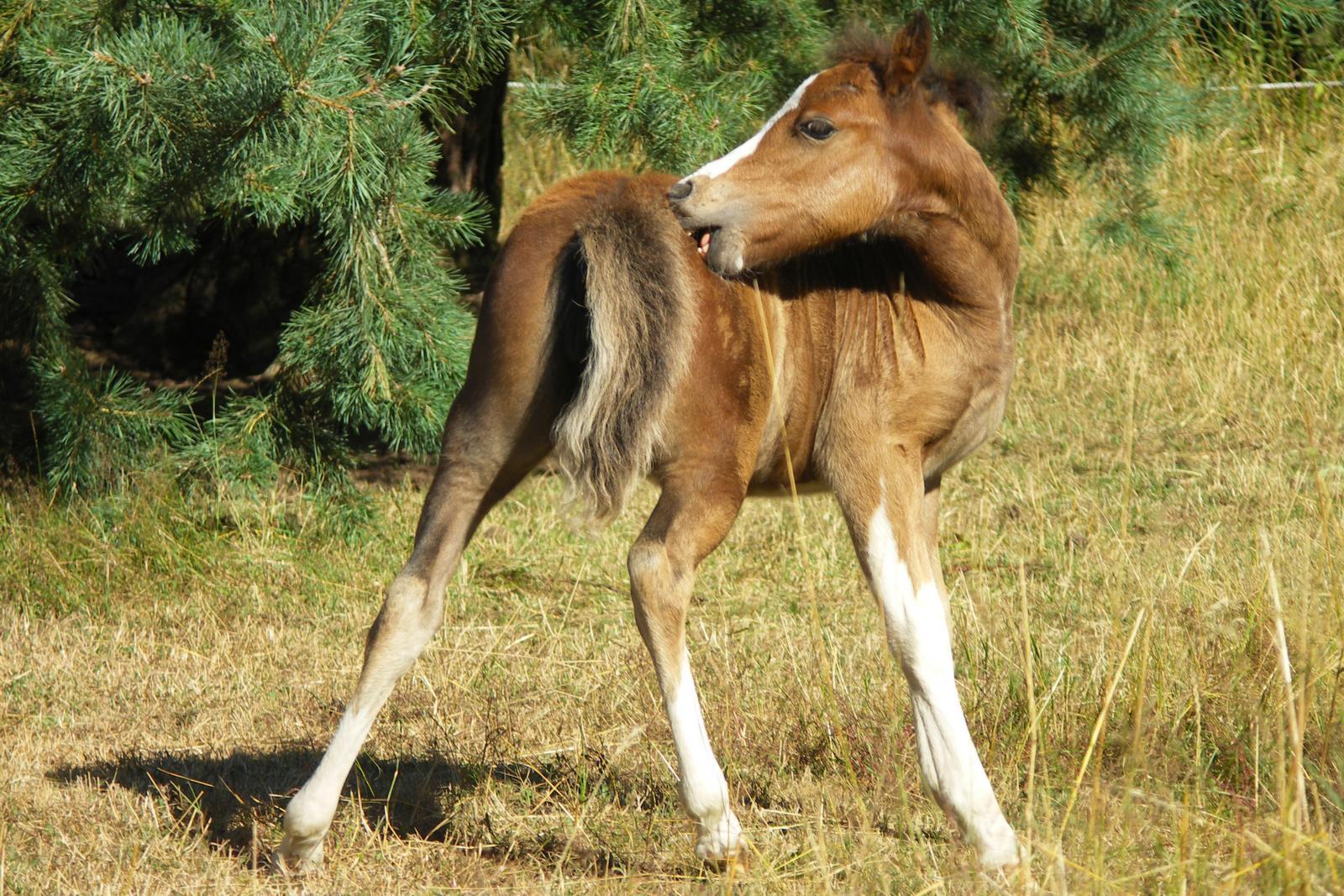 Haarlinge beim Pferd - was sind die Ursachen?