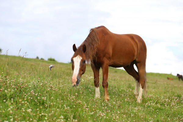 magenschleimhautentzuendung-pferd-masterhorse