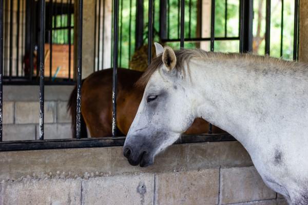 druse-beim-pferd
