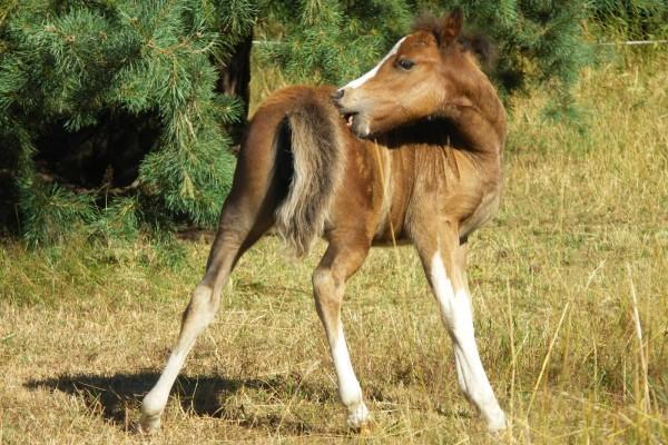 haarlinge-beim-pferd