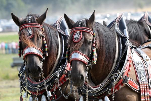 bierhefe-pferd
