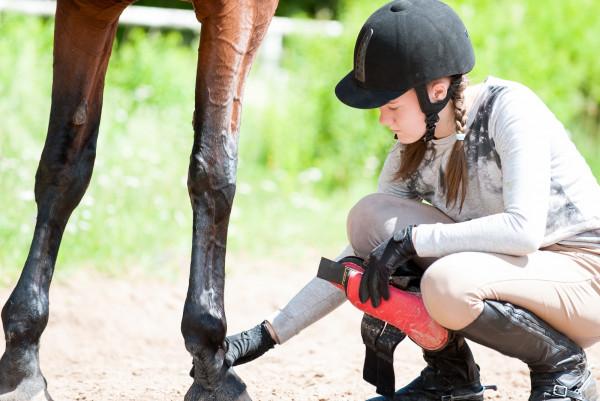 arthrose-beim-pferd-vorbeugen-expertentipp
