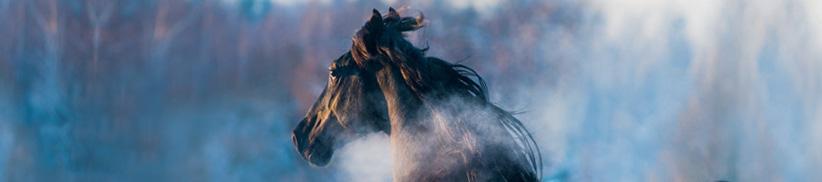 Husten beim Pferd