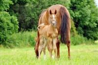 Selen fürs Pferd - wie sieht die richtige Dosierung aus.