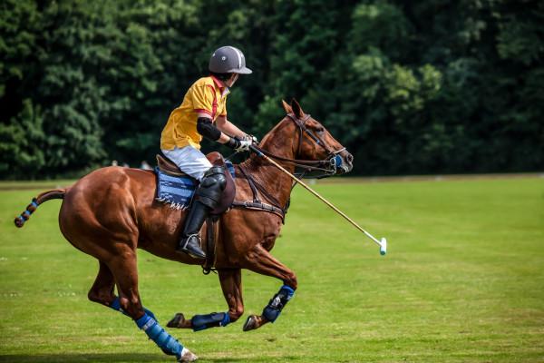 arthrose-beim-pferd-expertentipp