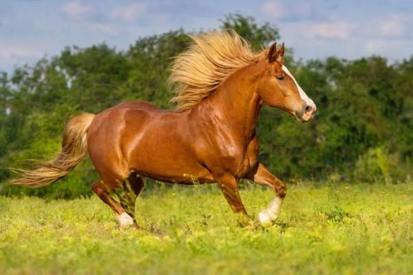 Vitaminversorgung des Pferdes.