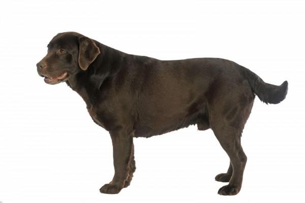 dicker-hund-masterdog-expertentipp