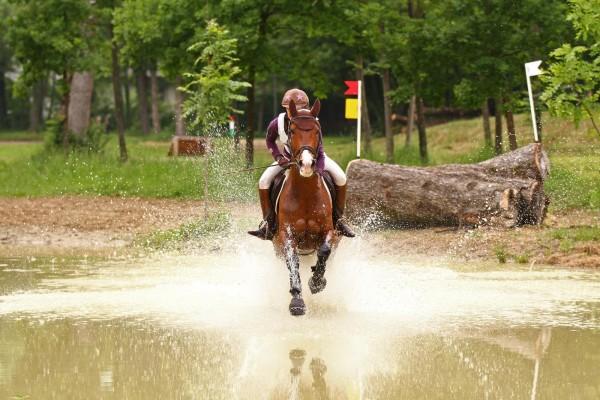 elektrolyte-pferd