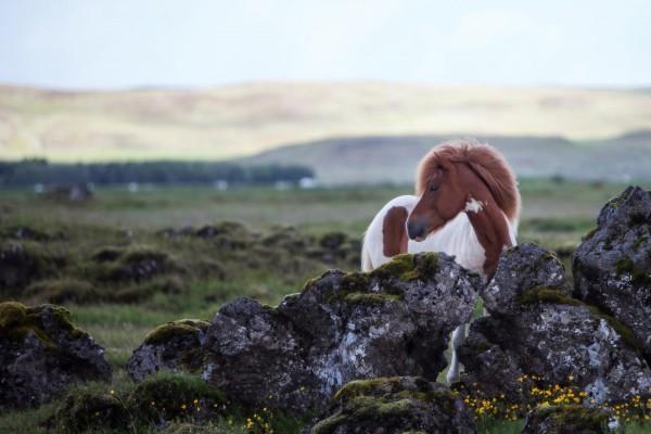 fellwechsel-beim-pferd-fragen