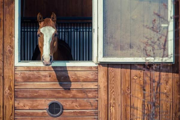 brennnessel-fuer-pferde_web