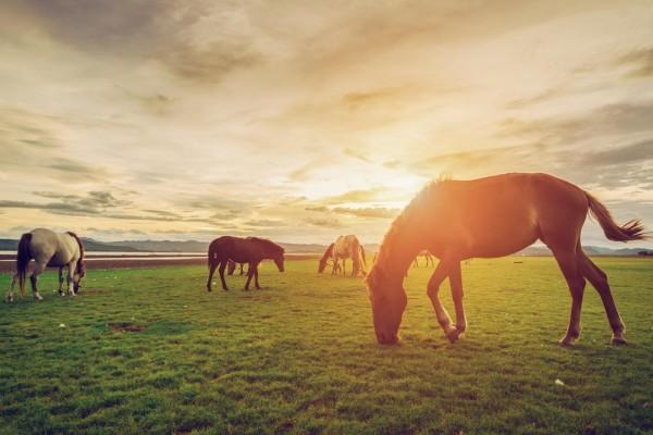 kolik-beim-pferd