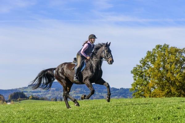 muskelaufbau-beim-pferd