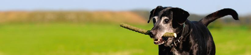 Stoffwechselprobleme belasten Leber und Nieren beim Hund!