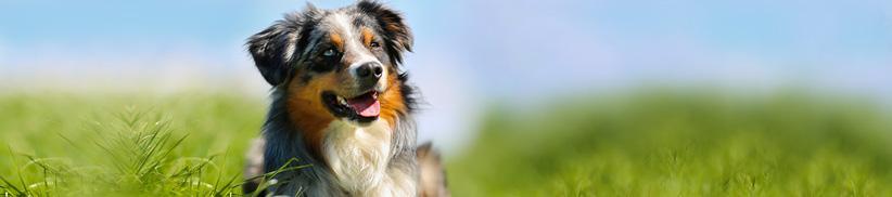 Durchfall oder dünner Kot – die Verdauung des Hundes