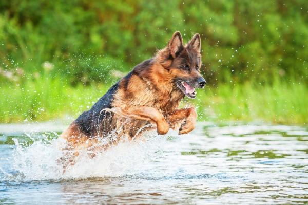 masterdog-hueftgelenksdysplasie-hund5a2e73aa2588d
