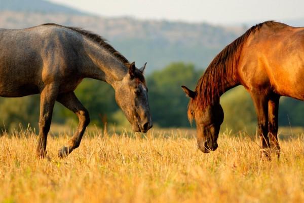 kotwasser-beim-pferd