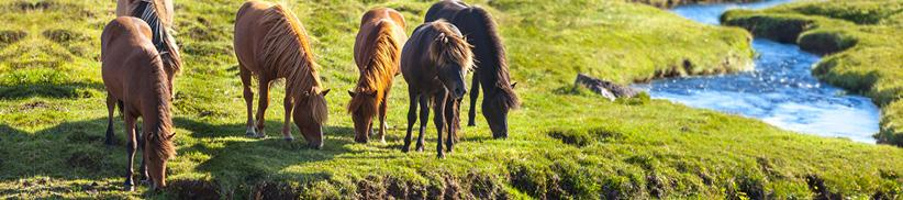 Das richtige Mineralfutter für Ihr Pferd!