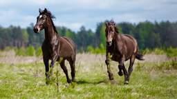 Arthorse beim Pferd vorbeugen