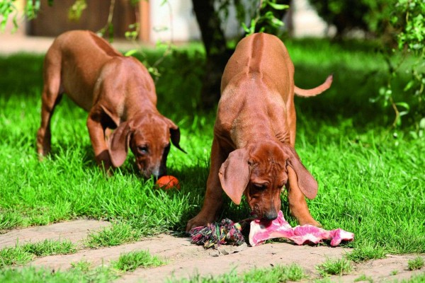 barfen-beim-hund-masterdog-expertentipp