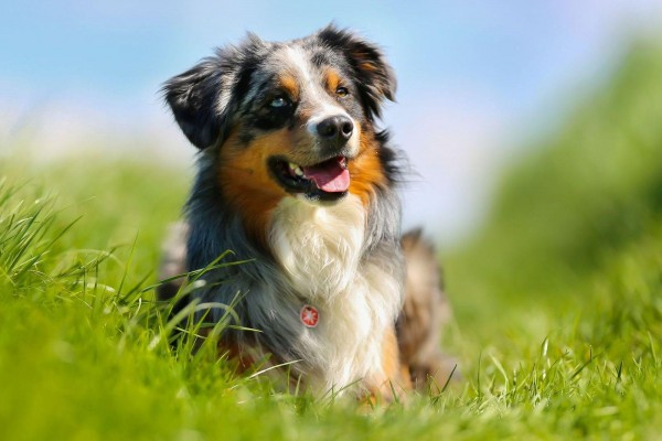 masterdog-haut-und-fell-beim-hund5a2e738c97f31