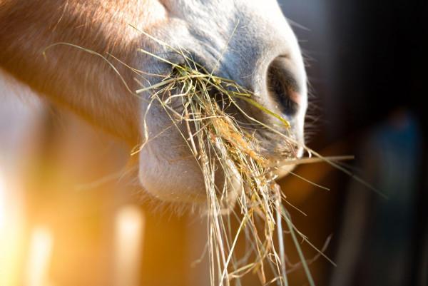 muskelaufbau-beim-pferd_expertentipp