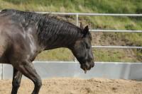 Equine infektiöse Anämie - strenge Quarantäne- und Sperrmaßnahmen sind einzuhalten.