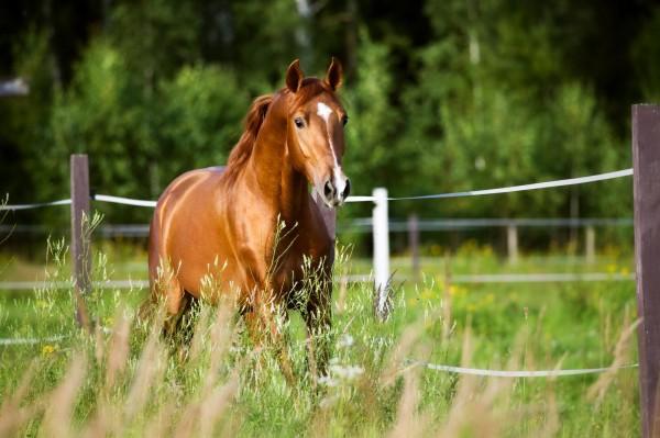 angelaufene-beine-beim-pferd