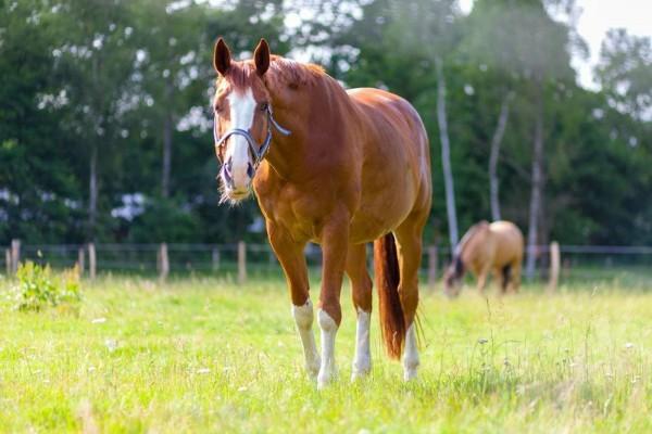 hufrolle-pferd5aa26af983c8b