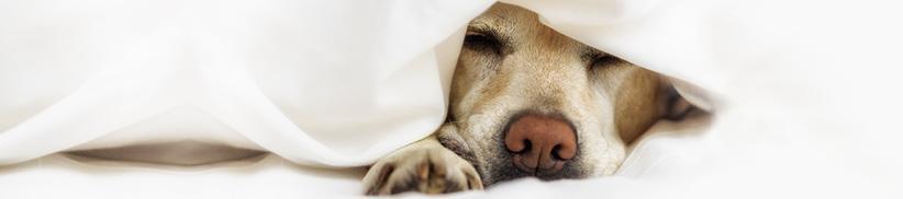 Warum die Nährstoffversorgung des Hundes Einfluss auf sein Gemüt nehmen kann!